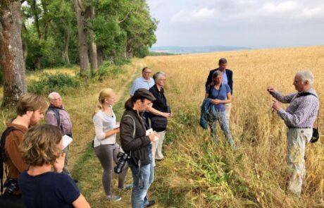 Wildblumenacker (mit Weizen) auf der Wernershöhe
